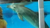 vista previa del artículo Los delfines y sus amigos en Selwo Marina
