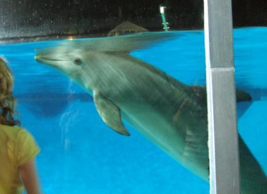 Los delfines y sus amigos
