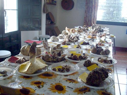Curso práctico de introducción a las setas comestibles