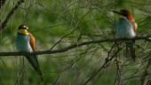 vista previa del artículo El campeón del mundo de ornitología es de Nerja